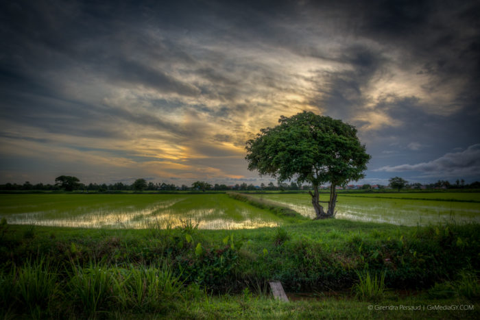 The Green Tree at Sunset