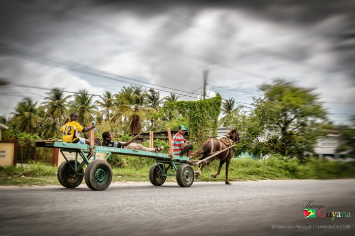 When Was The Last Time You Took A Ride On A Horse Cart?