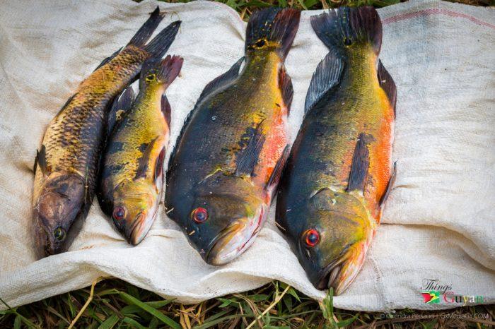 """Lukanani – The """"Sweetest"""" Sweet Water Fish"""