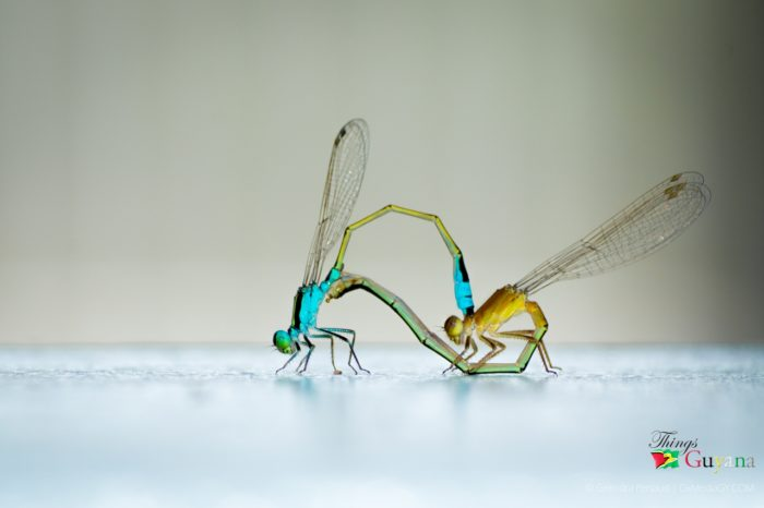Got To Love The Insects in Guyana