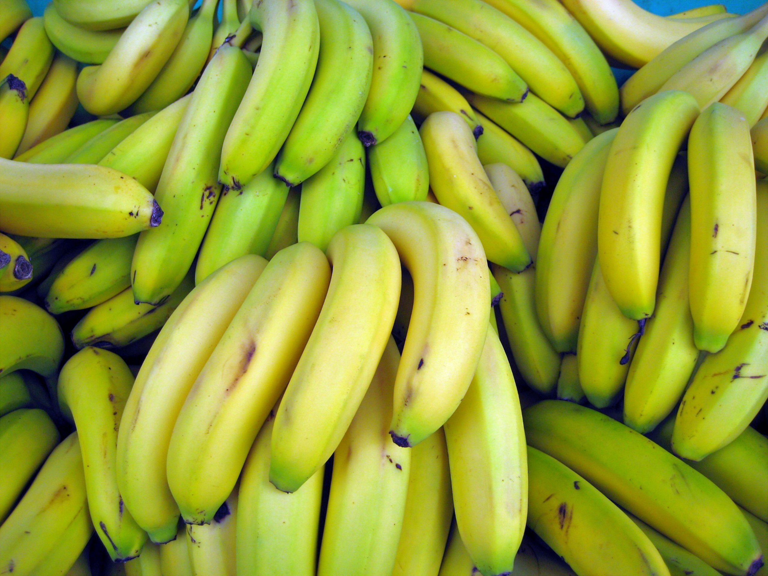 Banana Extinction Is Possible, but Science Might Save Us